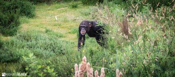 Safaripark Beekse Bergen - 0317