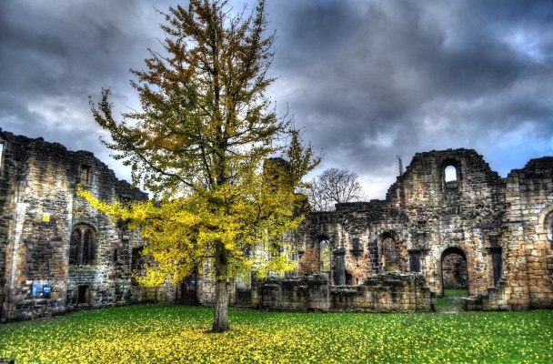 Kirkstall Abbey and Lone Tree
