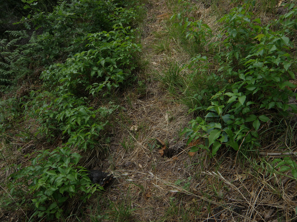 Poison Ivy on the Gila NF | Gila National Forest - New ...