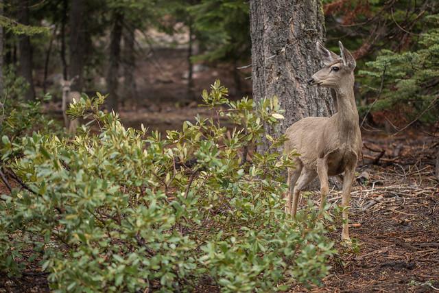 Wildlife in Kings Canyon