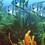 Reeffish vol1.01 (36)