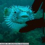 Reeffish vol1.01 (27)