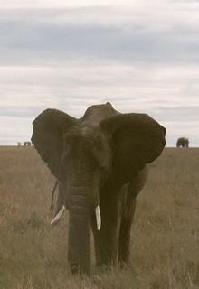 Kenia2002-10-14