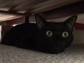 Image result for cat under bed