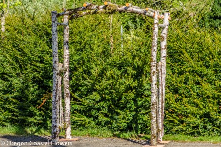 Birch Natural Wedding Arch-1