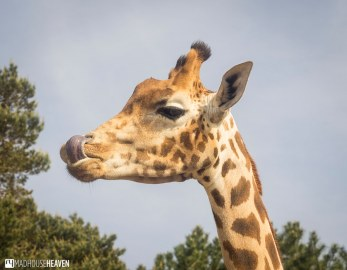 Safaripark Beekse Bergen - 0213