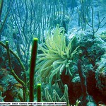 Reeffish vol1.01 (4)