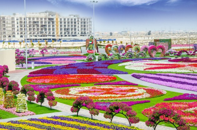 Dubai Miracle Garden | Dubai Miracle Garden, The most beauti… | Flickr