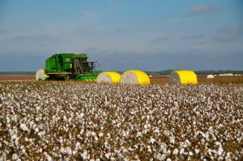 Harvesting ( Machinery Cotton Picker )