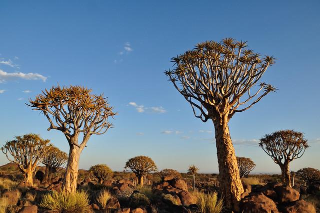 Namibia (1280)