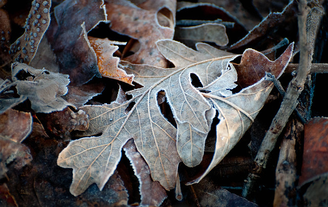Fall Frost