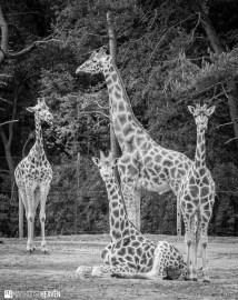 Safaripark Beekse Bergen - 0248