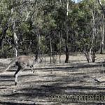 Viajefilos en Australia. Adelaida 45