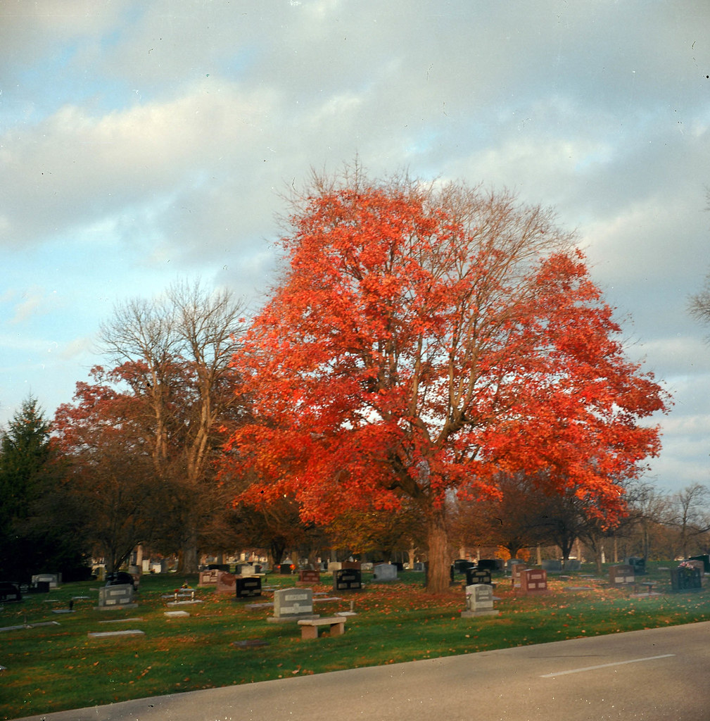 Autumn tree in Crown Hill