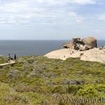 Viajefilos en Australia. Kangaroo 43