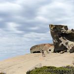 Viajefilos en Australia. Kangaroo 55