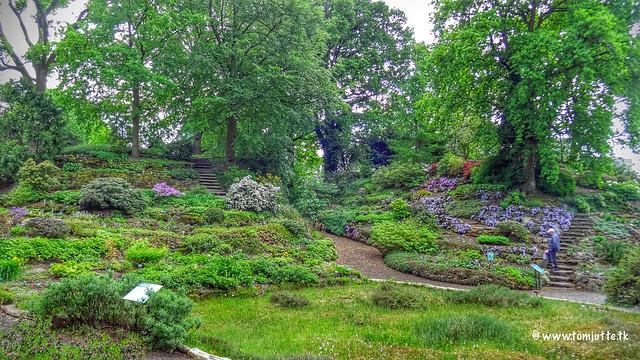 Botanische Tuinen, Utrecht, Netherlands - 4253
