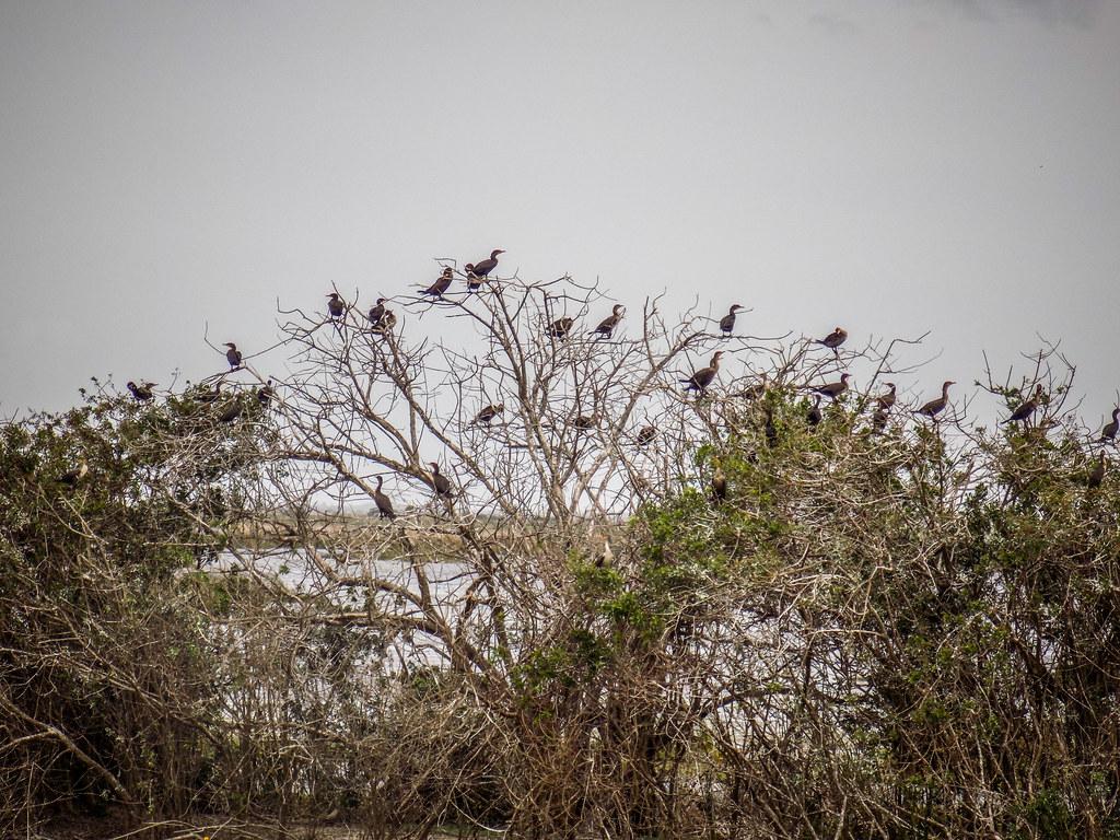 Stick Marsh Birding-008