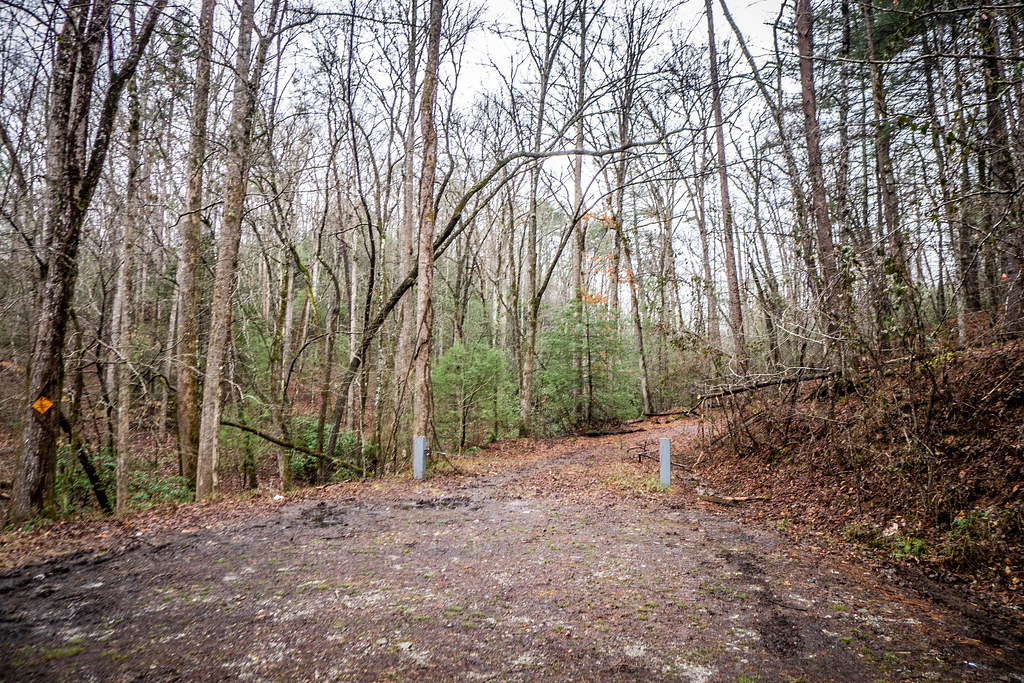 Tall Pines Preserve and South Saluda Church Cemetery-19