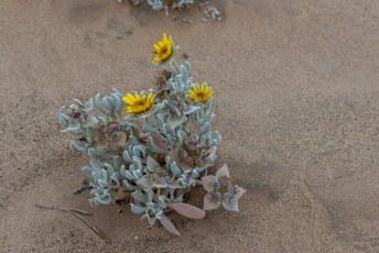 We kwamer er nog wat bijzondere plantjes tegen die in dit extreem droge klimaat toch kunnen groeien en bloeien.