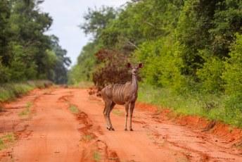 We reden terug naar de grote weg, en staken de grens over met Zimbabwe. Op naar Malawi.