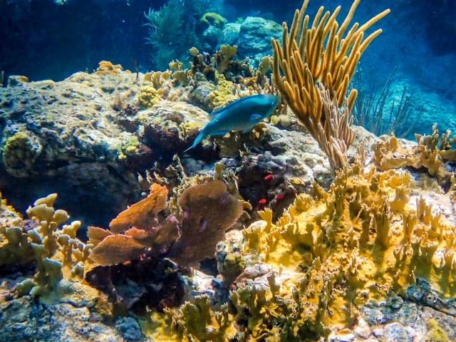 DCL March 2019 Tortola Underwater-236.jpg