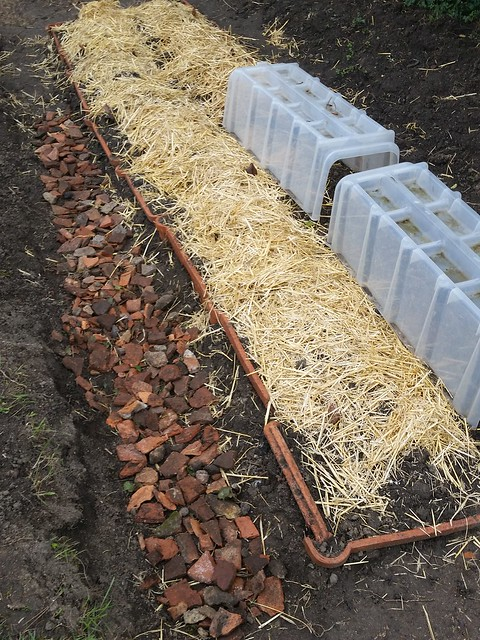 Making an Asparagus Bed