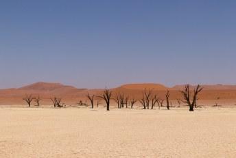 Op de bodem van deadvlei staan deze dode bomen. Ongeveer 900 jaar geleden droogde het hier op en stierven ze.