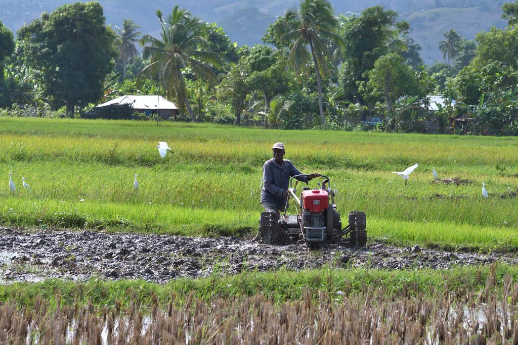 海地全國稻種生產強化計畫 | 2016年10月,海地受到馬修颶風侵襲,大南部地區農作物年產量直接腰斬,僅剩前 ...