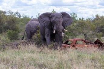Toen we eenmaal het park uitwaren zagen we hordes olifanten.