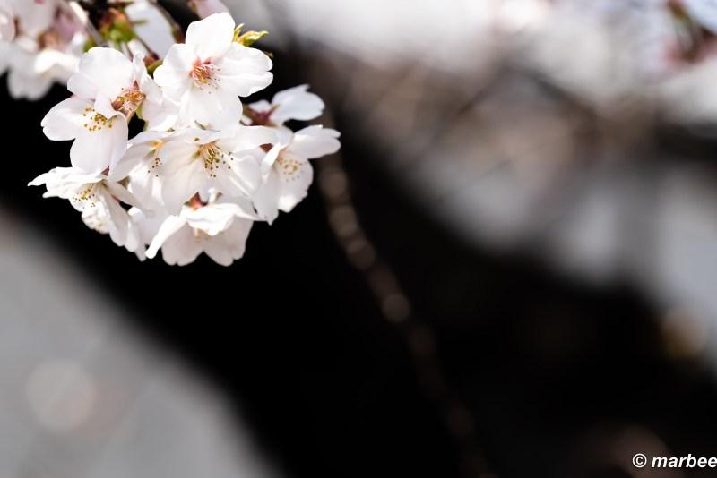 Bloom fresh