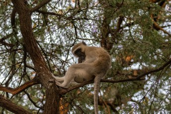 's Morgens bleek dat de aapjes de vuilniston open hadden gekregen, ze likten onze blikjes brandschoon.