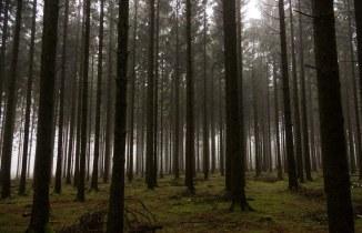 Bois jacques woods