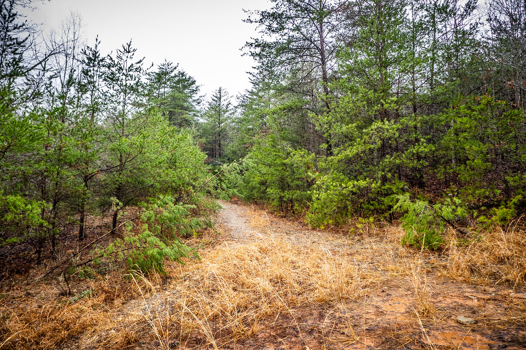 Tall Pines Preserve and South Saluda Church Cemetery-23