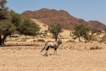 Na onze ochtendklim zetten we koers naar Lüderitz.