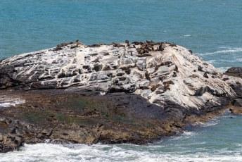 Ze zeggen weleens dat je niet moet schijten waar je eet, maar de zeeleeuwen kolonie hier heeft daar schijt aan.