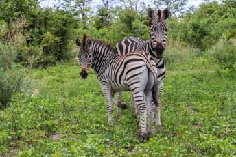 Het was een goede plek voor safaris want het zat er tjokvol wilde beesten.