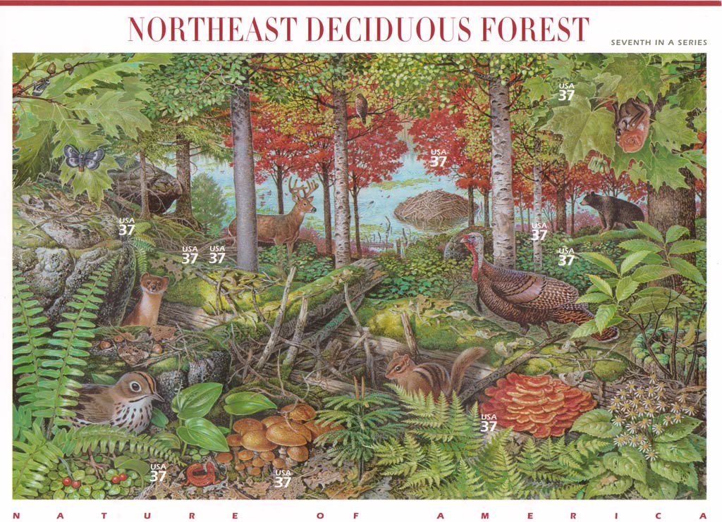 Thus only small fragments of the original carolinian forest found are in protected areas of ontario. Northeast Deciduous Forest Mouse Over For Flora Fauna Name Flickr