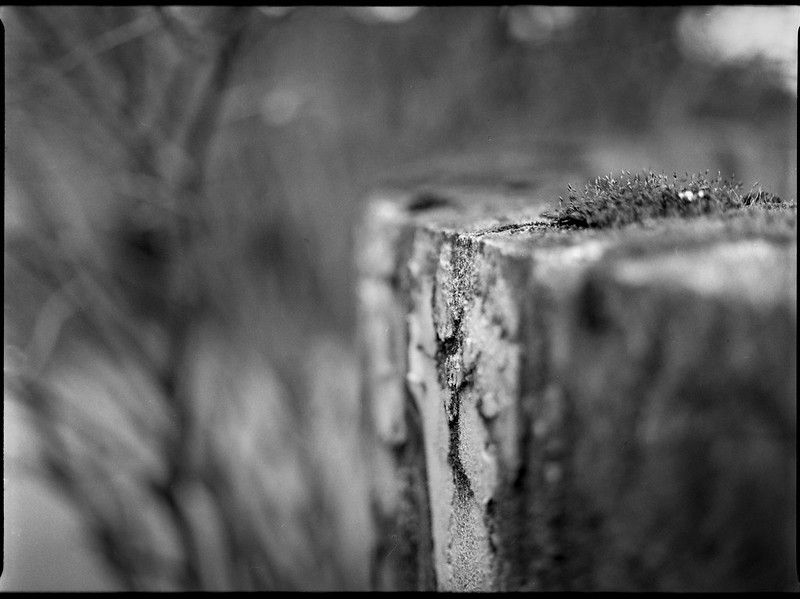 old concrete wall, moss-covered, shallow depth of field, North Asheville, NC, Mamiya 645 Pro, mamiya sekor 80mm F-2.8, 3.20.18