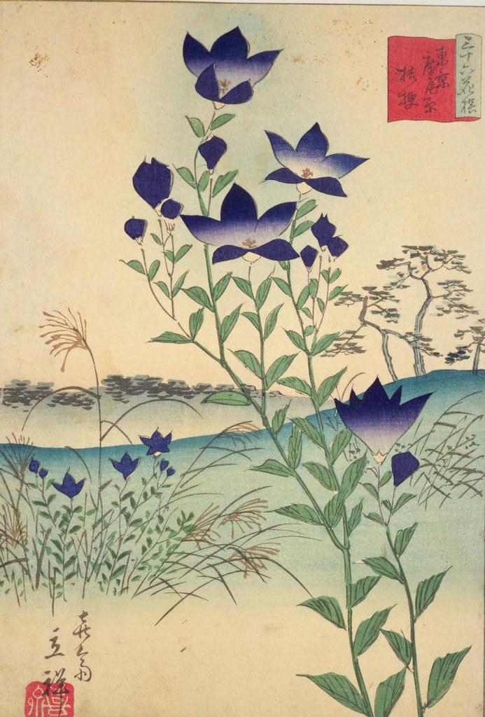花の畫像について: 無料印刷可能東京 花 名所