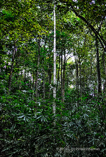Measuring 60 x 7.5 m (after ashon, 1982). Tropical Evergreen Forests Of South India Athirapilly K Flickr