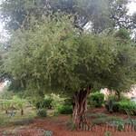 Essaouira 01