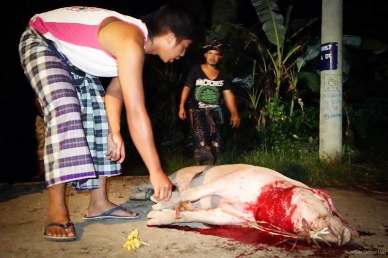 2013-03-13 Pig Slaughter - DSC00936-FullWM