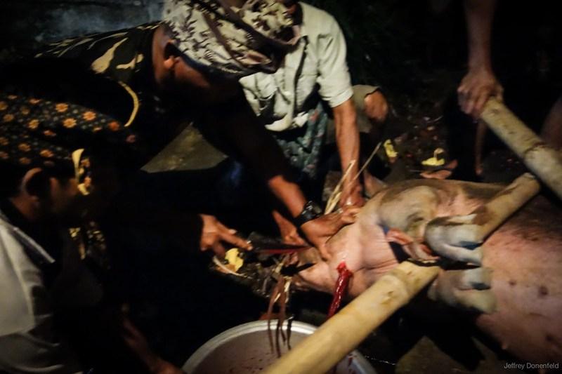 2013-03-13 Pig Slaughter - DSC00905-FullWM