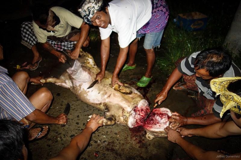 2013-03-13 Pig Slaughter - DSC01043-FullWM