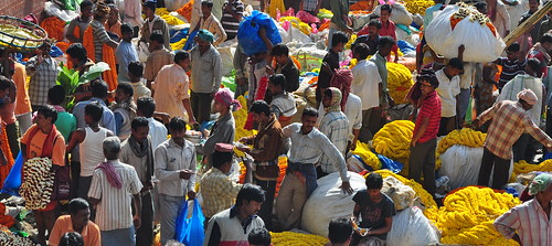 A Colorful Walk through the Paths of Mullick Ghat Flower Market