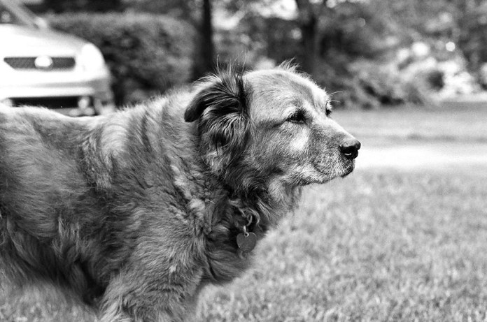 Shiny dog