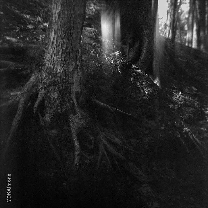 Light Leaks and Tree Roots