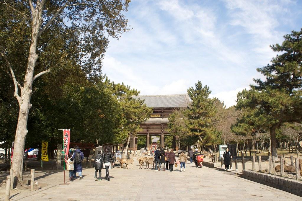 東大寺の鹿   Rie Ono   Flickr