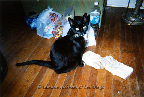 P024.316m.r.t Hawthorn St: Edna Myers' cat sitting next to bags of food and gloves.